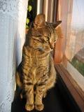 Buena mañana mi vecino Foto de archivo libre de regalías