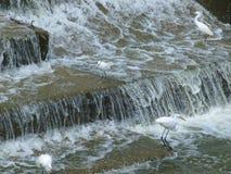 Buena pesca para las garcetas, las garzas y los cormoranes Imagenes de archivo