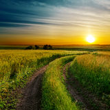 Buena puesta del sol y camino en campo verde Imagen de archivo