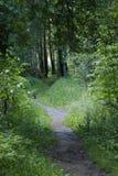 Buena trayectoria de bosque para los paseos imagenes de archivo