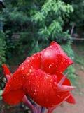 Buenas flores Fotos de archivo