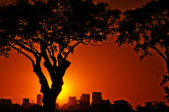 Buenos Aires at Sunset. A vibrant summer sunset with trees in the foreground and Buenos Aires in the background Stock Photography