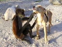 Buenos amigos del mono y del perro Imagen de archivo