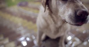 Buenos juegos del perro con el dueño almacen de metraje de vídeo