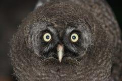 buenos ojos imagen de archivo libre de regalías