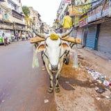 Buey-carro en las calles de Delhi vieja Imagenes de archivo