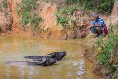 Bufallos Kalaw lo Stato Shan Myanmar Immagini Stock Libere da Diritti