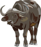 Bufalo africano illustrazione di stock