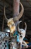 Bufalo capo del cranio Immagine Stock