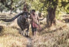 Bufalo d'acqua felice di guida del ragazzo Fotografia Stock Libera da Diritti