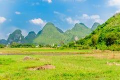 Bufalo d'acqua nel paesaggio di morfologia carsica da Yangshuo Immagini Stock