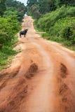Bufalo d'acqua in regione selvaggia Fotografia Stock Libera da Diritti