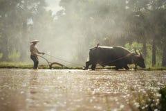 Bufalo dell'attrezzo dell'agricoltore Immagini Stock Libere da Diritti