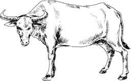 Bufalo disegnato a mano Fotografia Stock