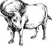 Bufalo disegnato a mano Fotografie Stock
