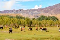 Bufalo en la montaña con el cielo azul Foto de archivo