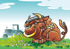 Bufalo. Oxen in cap rests upon herb with flower on meadow tractor afield Royalty Free Stock Photo