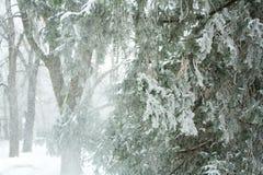 Bufera di neve Immagine Stock