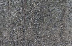 Bufera di neve, Fotografie Stock Libere da Diritti