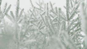 Bufera di neve, neve che cade ai rami degli abeti archivi video