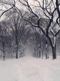 Bufera di neve del Central Park Fotografia Stock
