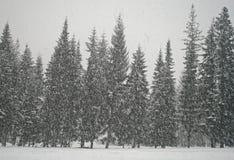 Bufera di neve di inverno in foresta Immagini Stock