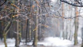Bufera di neve di inverno nel legno stock footage
