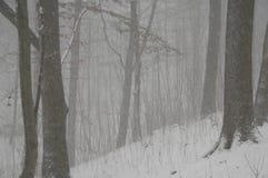 Bufera di neve nella foresta Immagine Stock Libera da Diritti