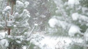Bufera di neve pesante sopra i prati in foresta archivi video