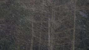 Bufera di neve pesante in una foresta stock footage