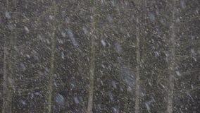 Bufera di neve pesante in una foresta video d archivio