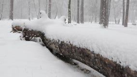 Bufera di neve pesante in una foresta ucraina con un tronco di albero caduto archivi video