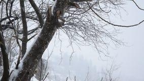 Bufera di neve stagionale pesante del tempo stock footage
