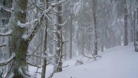 Bufera di neve in una foresta di conifere nevosa della montagna, tempo poco amichevole scomodo di inverno archivi video