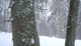 Bufera di neve in una foresta di conifere nevosa della montagna, tempo poco amichevole scomodo di inverno video d archivio