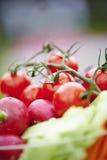 Bufete vegetal do casamento Fotografia de Stock