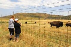 Buffalo étroit Photographie stock libre de droits