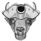 Buffalo, βίσωνας, βόδι, ζώο ταύρων που φορούν το σωριασμένο καπέλο καπέλο πειρατών, tricorn ναυτικός, ναυτικός, ναυτικός, ή ναυτι Στοκ Εικόνα