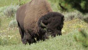 Buffalo_2 metrajes