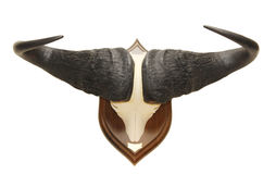 Buffalo africana Immagine Stock