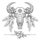 Buffalo or american bison skull Stock Images