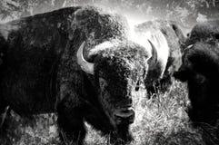 Buffalo astratta in Oklahoma Fotografia Stock Libera da Diritti