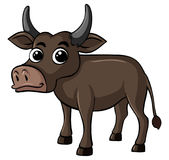 Buffalo avec le visage heureux Photographie stock