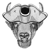 Buffalo, bison,ox, bull animal wearing pirate hat Cocked hat, tricorn Sailor, seaman, mariner, or seafarer. Wild animal wearing pirate cocket hat Stock Image