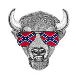 Buffalo, bison,ox, bull wearing glasses with National flag of the Confederate States of America Usa flag glasses Wild Stock Photos