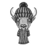 Buffalo, bison,ox, bull wearing knitted hat and scarf Stock Photos