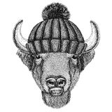 Buffalo, bison,ox, bull wearing winter knitted hat Royalty Free Stock Images