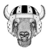 Buffalo, bison,ox, bull Wild animal wearing rugby helmet Sport illustration Royalty Free Stock Images
