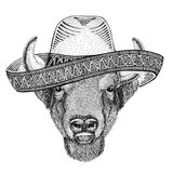 Buffalo, bison,ox, bull Wild animal wearing sombrero Mexico Fiesta Mexican party illustration Wild west. Wild animal wearing sombrero Mexico Fiesta Mexican party Royalty Free Stock Image