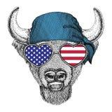Buffalo, bisonte, bue, bandana d'uso dell'animale selvatico del toro Immagini Stock Libere da Diritti